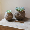 Make your own Kokedama Workshop | with Lilian Yangot | Saturday July 27th, 2019