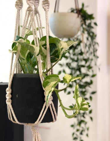 Tong Tied - Macrame Plant Hanger