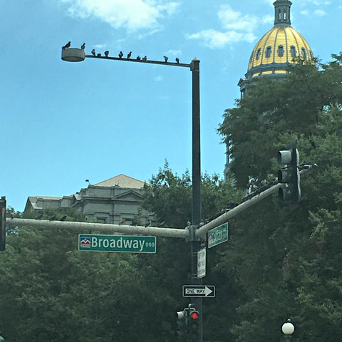 The Colorado capitol building visible over the intersection of two major Denver streets. See www.explorelocaluniverse.com for visitor tips and locally made, sustainably made goods that benefit Colorado causes!