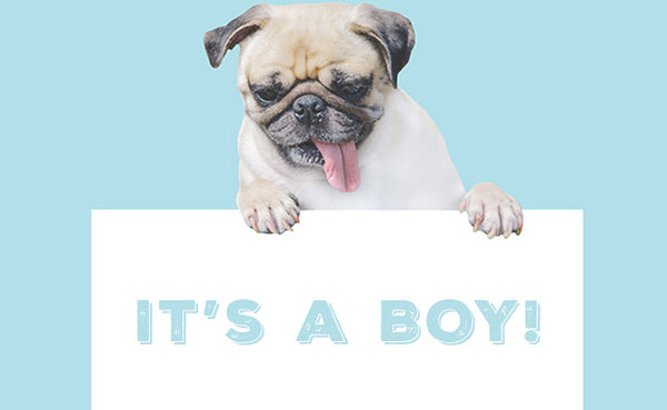 ways to reveal your baby's gender, gender reveal ideas, dog photos