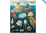 Cavallini Papers & Co - 1000 Piece Vintage Jigsaw Puzzle - Jellyfish