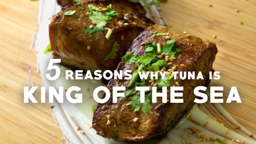 5 Reasons Why Tuna is King of The Sea