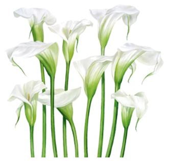 """White Lilies"" by Billy Showell - Blank Eco Friendly Greeting Card (each)"