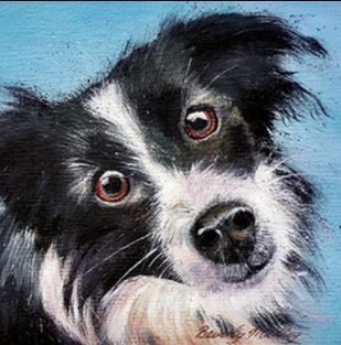 """Young Border Collie"" by Beverly Madley - Blank Eco Friendly Greeting Card (each)"