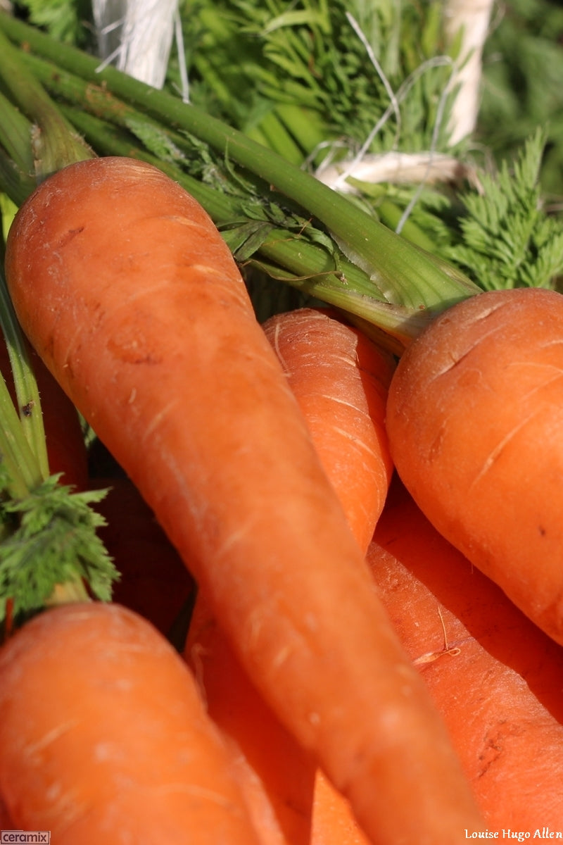 Fresh organically grown carrots from Aloe Dale Farm available at the Glen Fresh Market