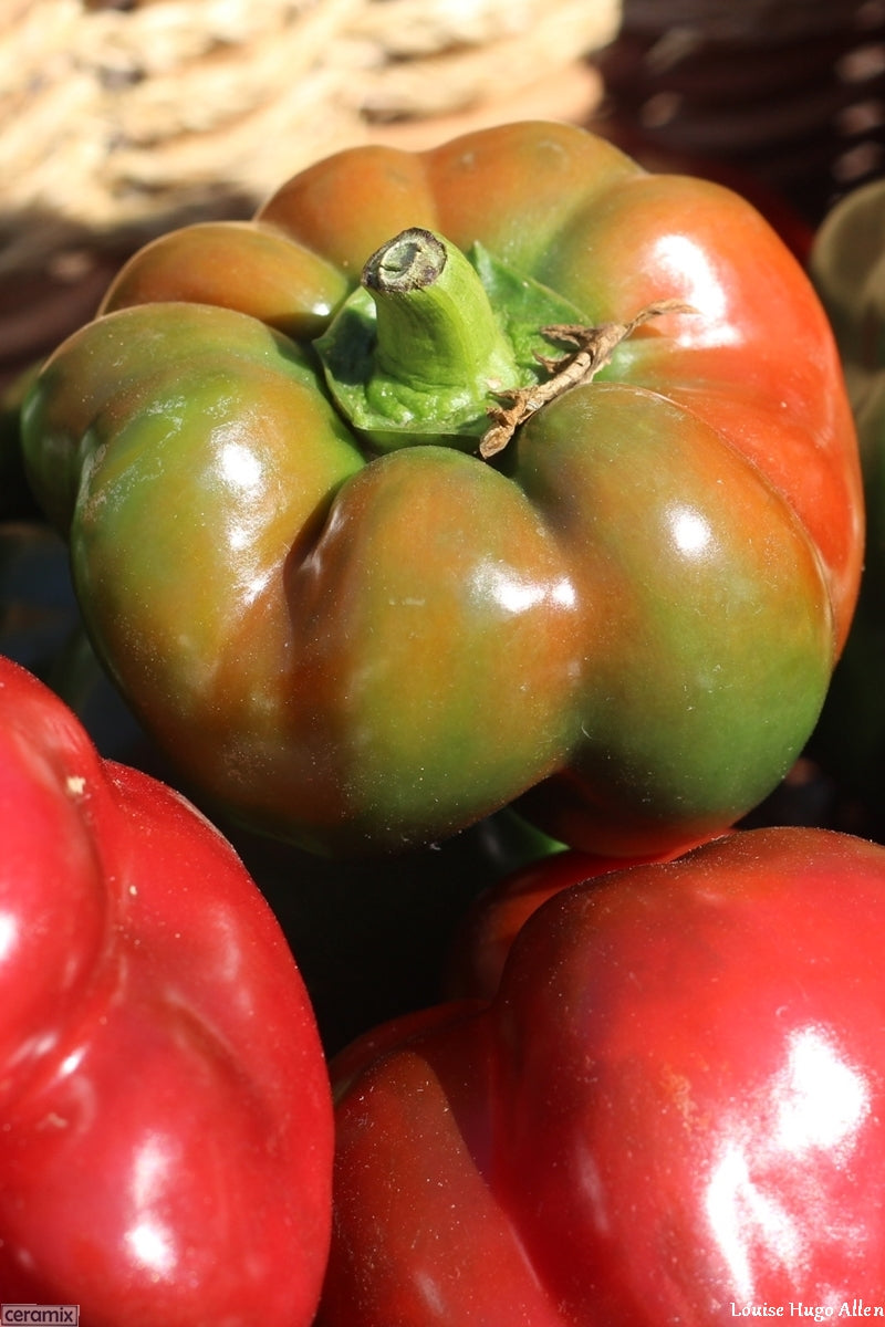 Green & Red Peppers from Aloe Dale Organic Farm