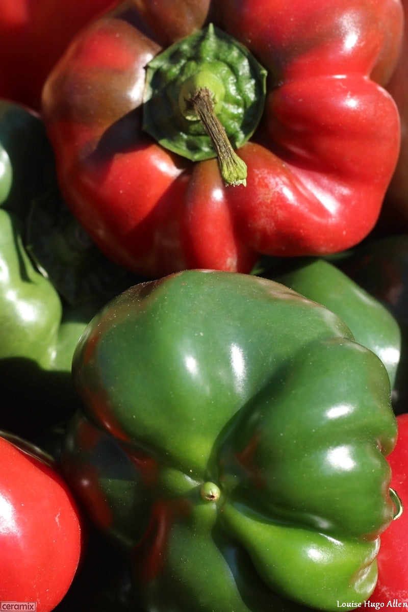 Organically grown Red & Green Peppers from Aloe Dale Farm