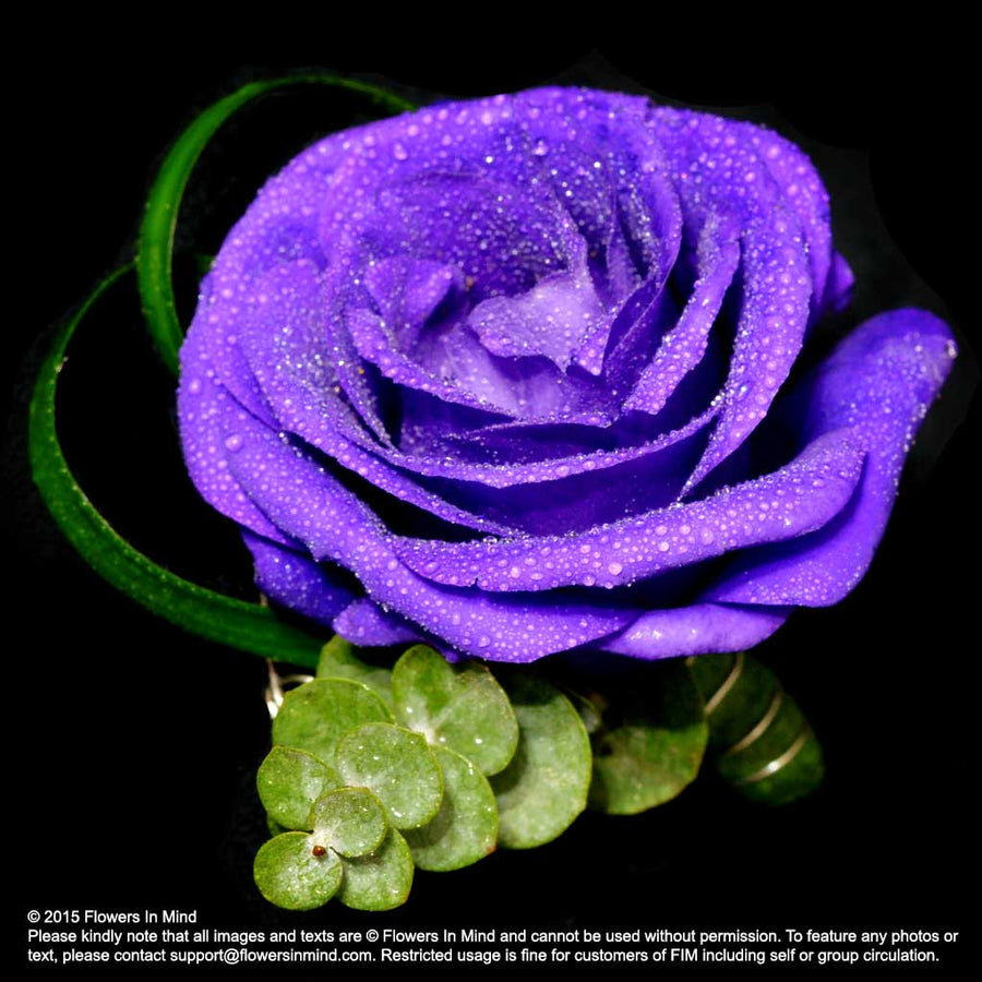 Corsage with Eustomas - Flowers-In-Mind