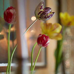 Historic Tulips <BR>at Bayntun Flowers