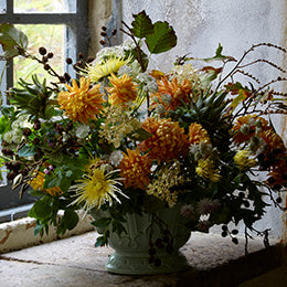 Chrysanthemums 'Spider Yellow' <BR>and 'Orange Allouise'