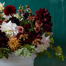Antique footbath with  <br>Dahlia 'Café au lait' and others, <br>Zinnia 'Queen red lime'  <br>and oak leaves