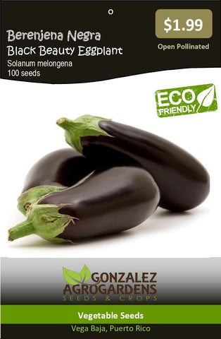 Berenjena Negra Black Beauty Eggplant Seeds
