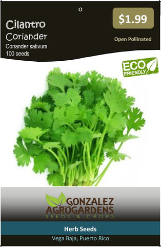 Cilantro Coriander Coriandrum Sativum Seeds Packet