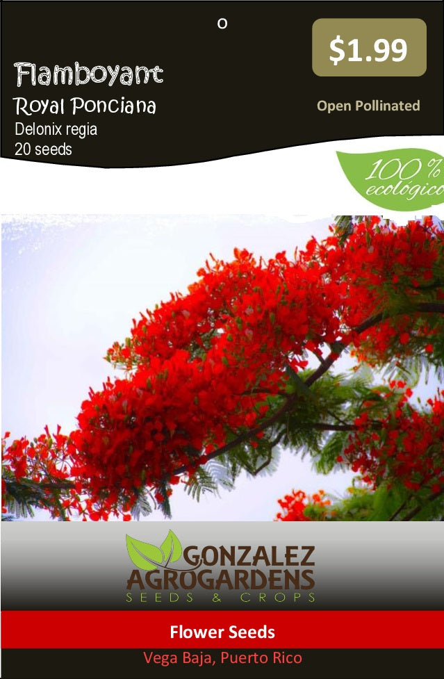Delonix Regia Red Royal Ponciana Flamboyan Rojo 20 seeds
