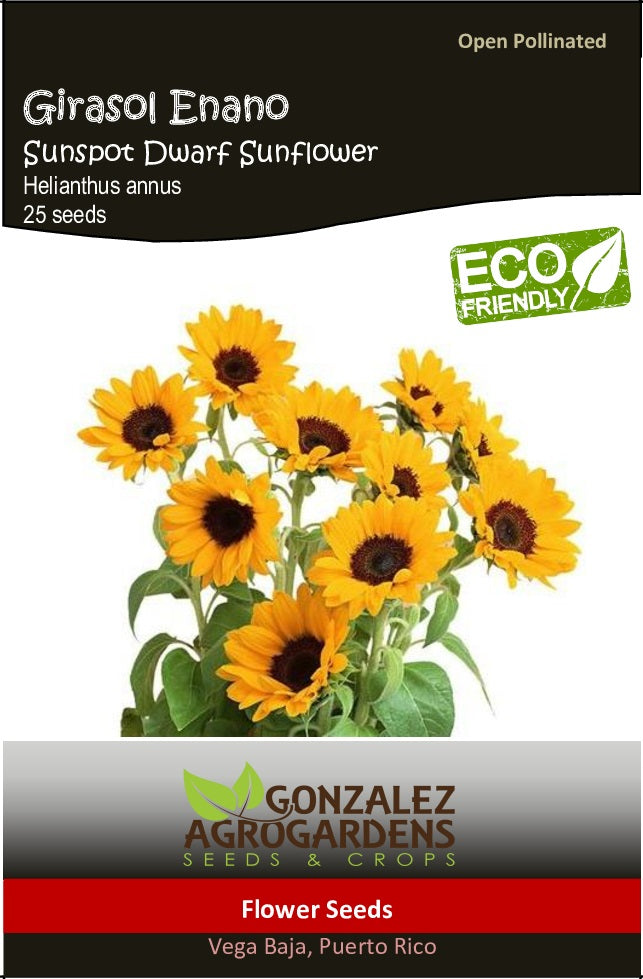 Girasol Enano Sunspot Dwarf Sunflower Seeds