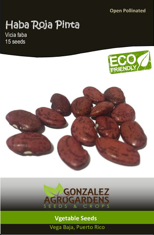 Haba Roja Pinta/Red Pinto Broad Bean Seeds