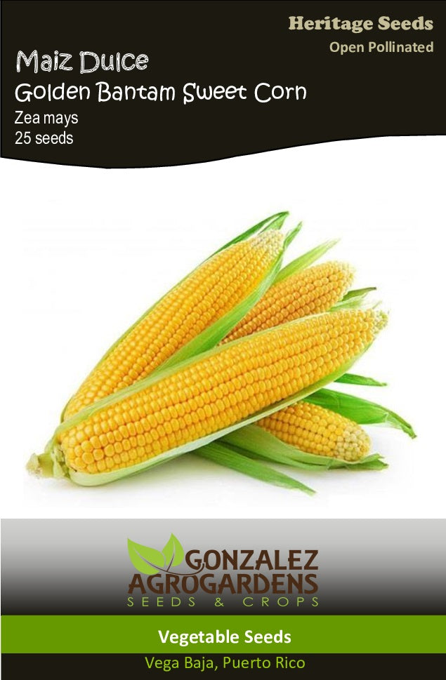 Maiz Dulce Golden Baantam Sweet Corn
