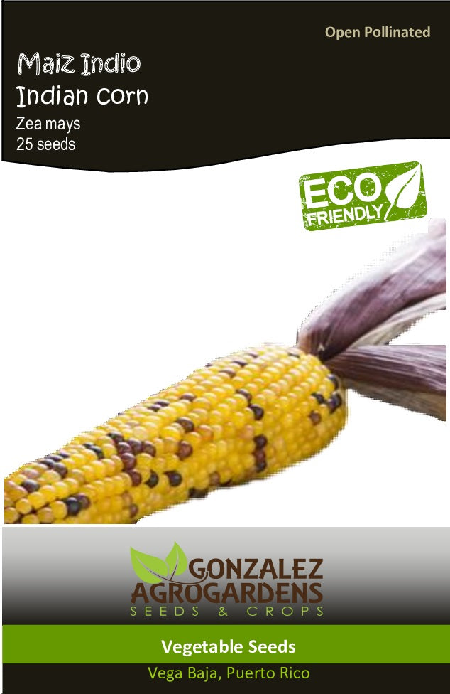 Maiz Indio 'Zea mays' Indian Corn