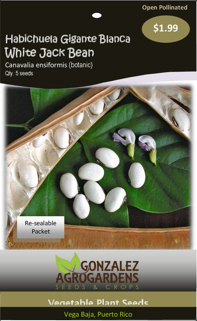 "Beans: White Giant Bean ""Canavalia ensiformis"" 5 Seeds packet"