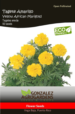 Tagete Amarillo/Yellow African Marigold
