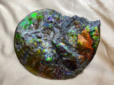 Ammolite Fossil #210418 (sold)