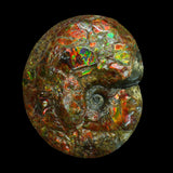 Canadian Fossil Ammonite 006