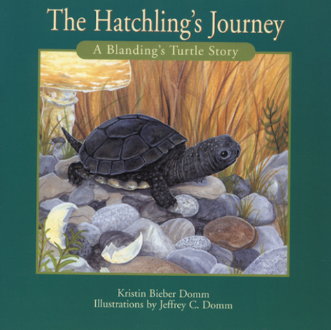 The Hatchling's Journey