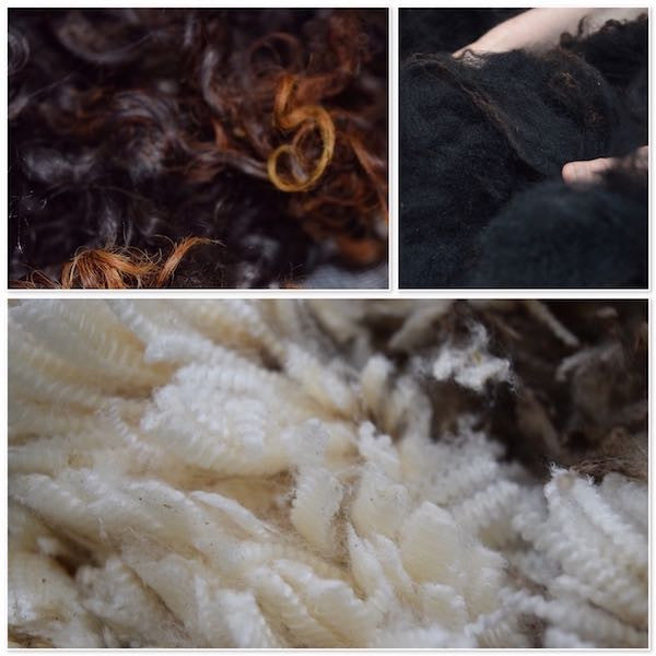 Raw wool of various breeds
