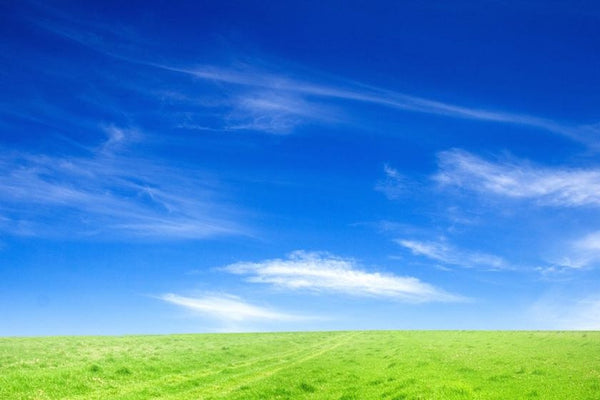 Grassy field with blue skies and clouds