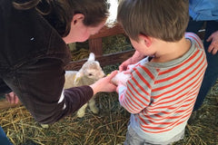 Mother and Child feeding baby lamb