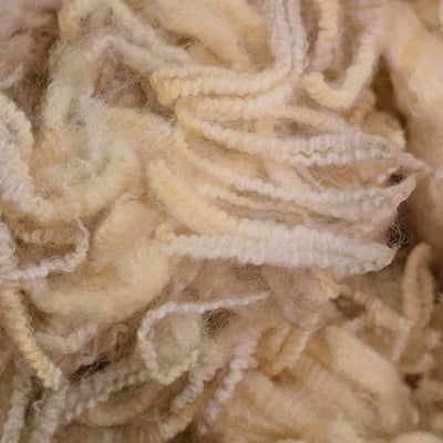 Raw Wool - Coopworth