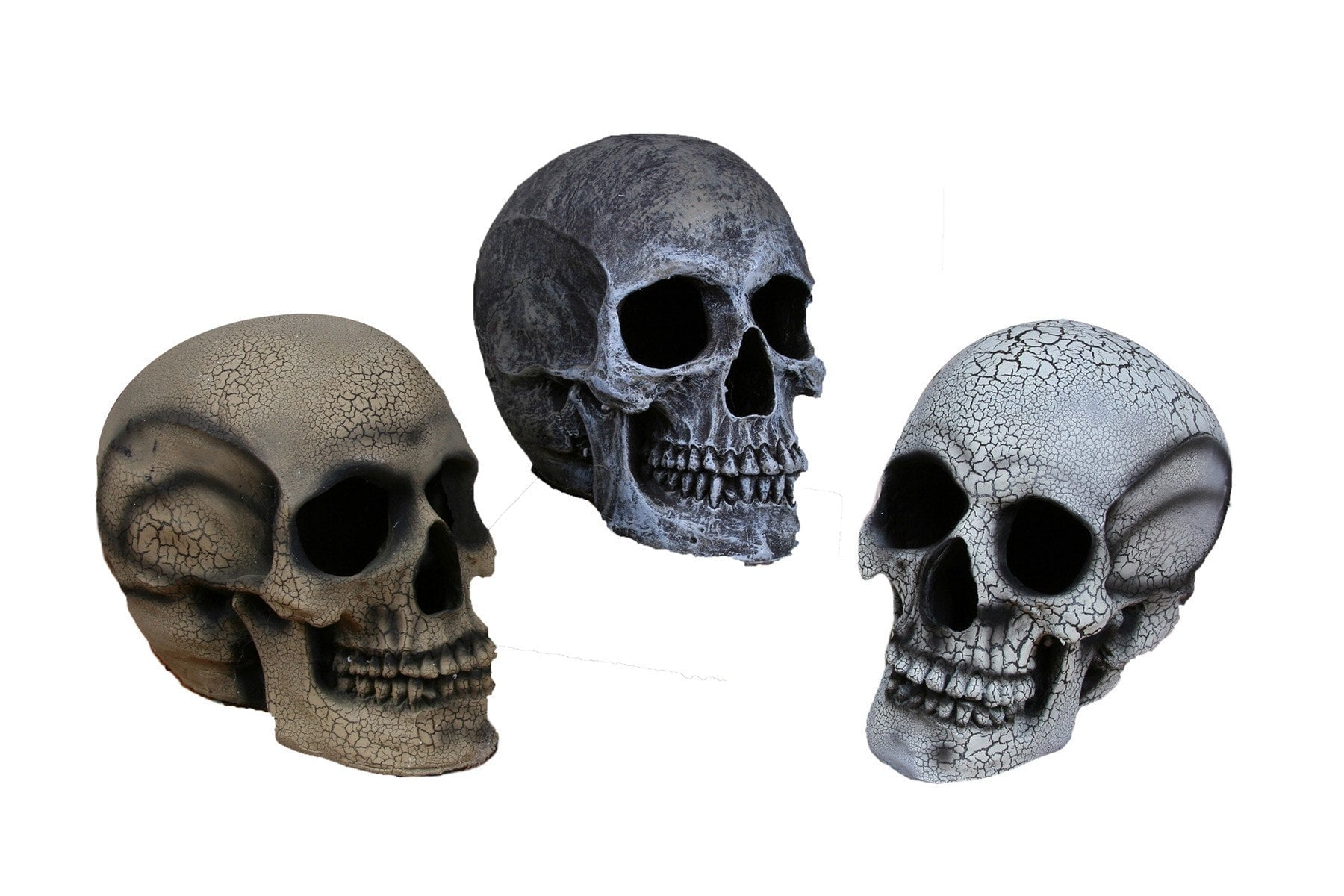 Morris Realistic Skull Small Grey - MaxWigs