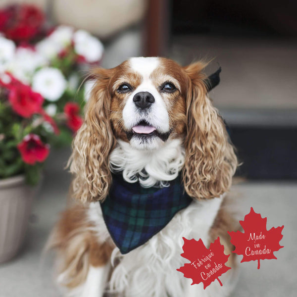 Pet Bandana in Black Watch Tartan