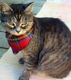 Pet Bandana in Royal Stewart Cat View