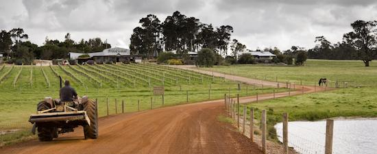 Brookwood Vineyard Tour & Tasting