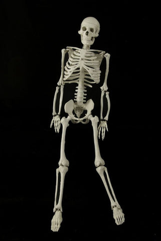 3ft Articulated Skeleton
