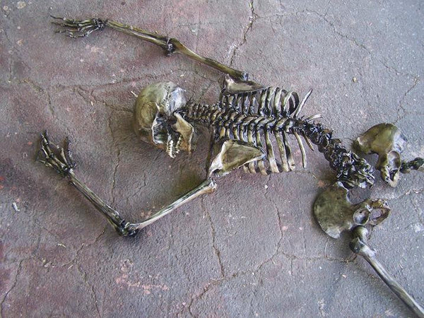 9 Piece Archeological Skeleton