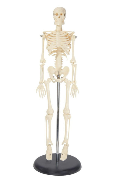 Tabletop Skeleton