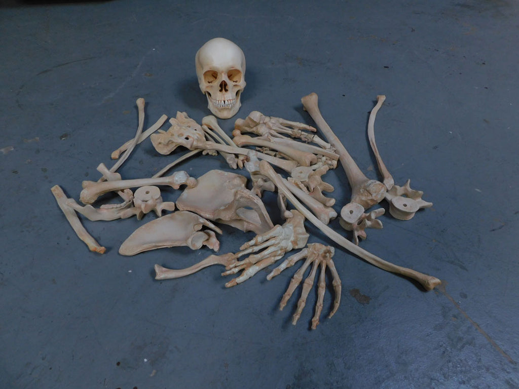 Lifecast Skull & Dozen Assorted Bones - Stock