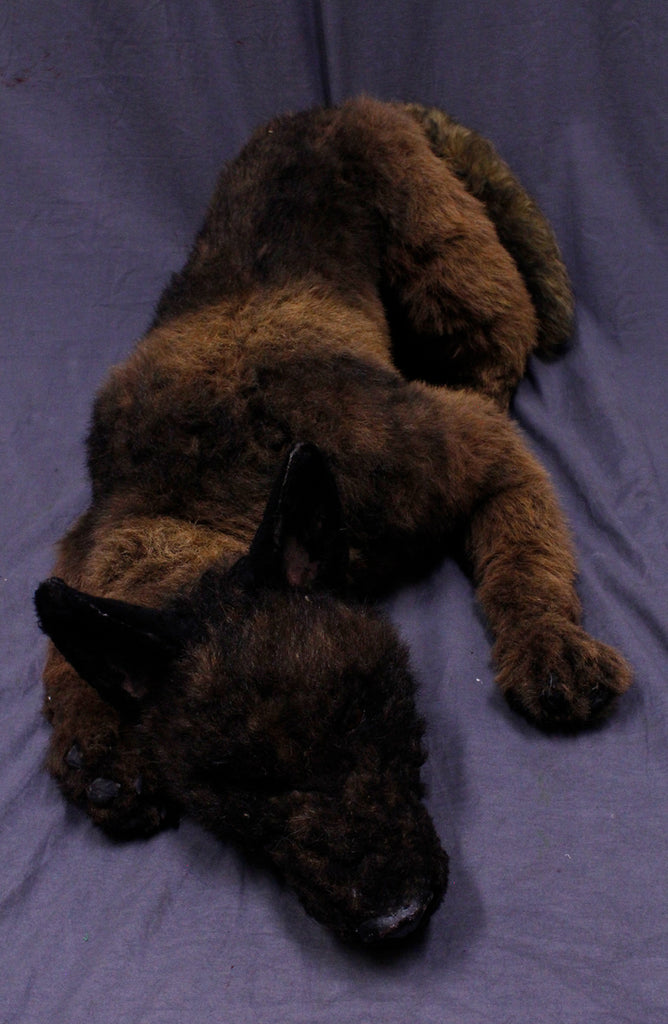 Belgian Rigged Dog Prop