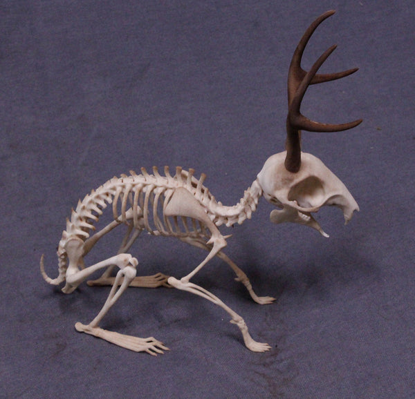 Jackalope Skeleton