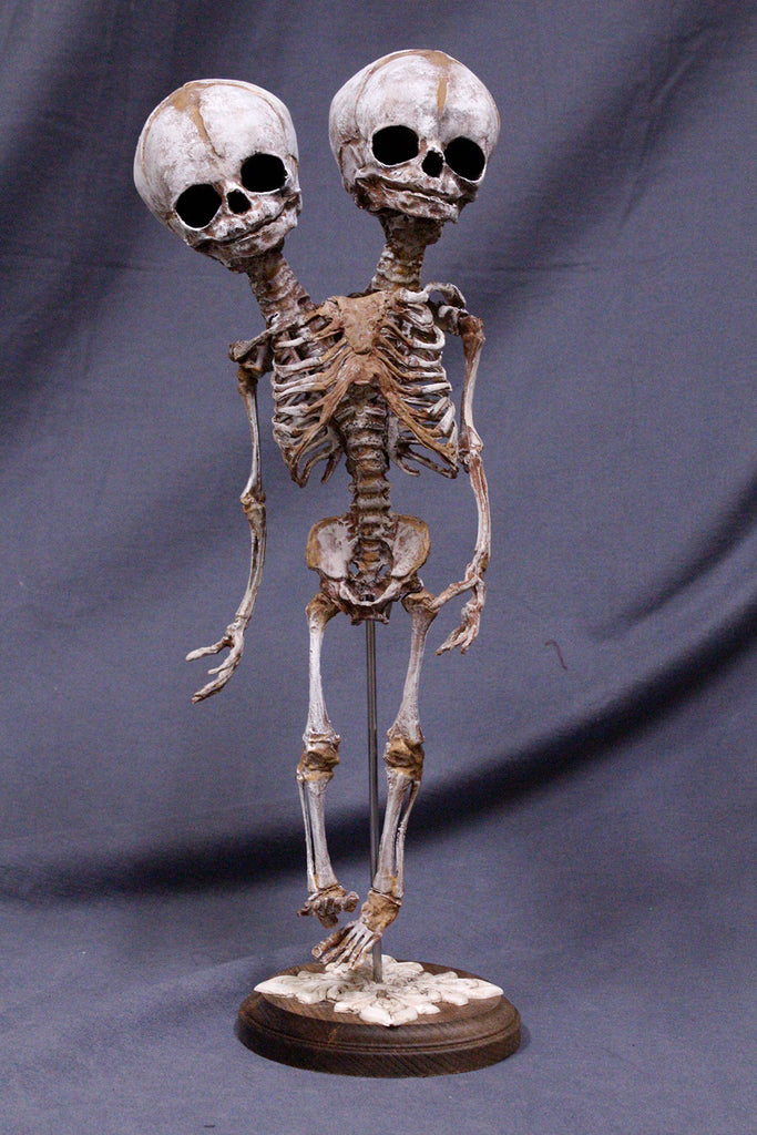 Two Headed Fetal Skeleton