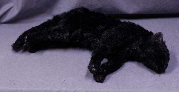 Black Cat Prop - Special Order
