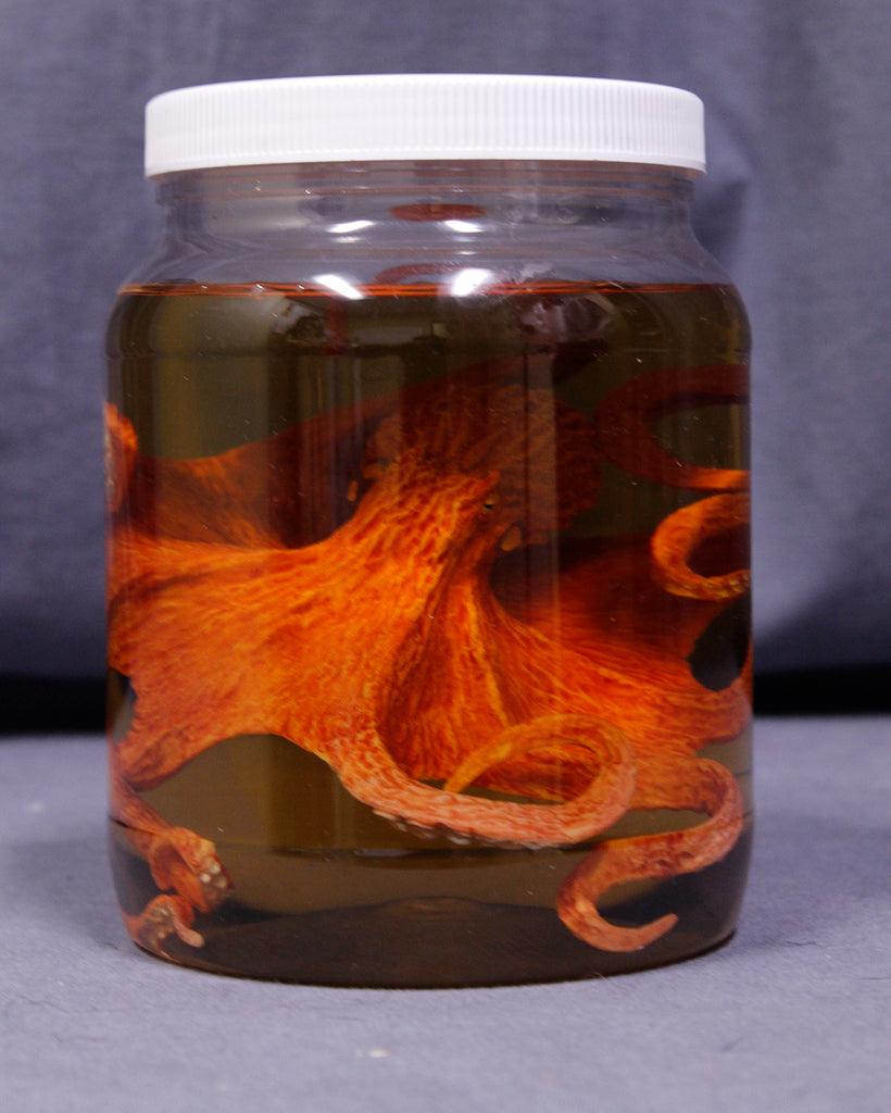 Large Octopus Replica Specimen Jar