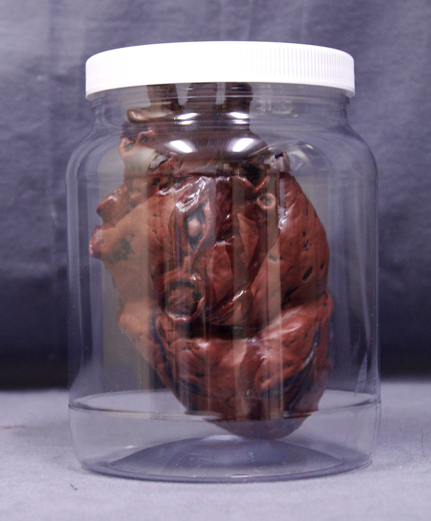 Replica Specimen Jar, Human Heart