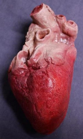 Lifelike Human Heart, Large