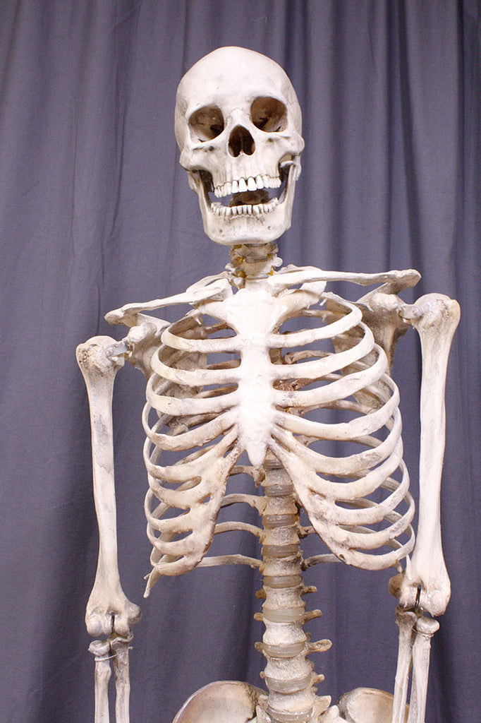 Crime Scene Skeleton in Natural Gray Rental