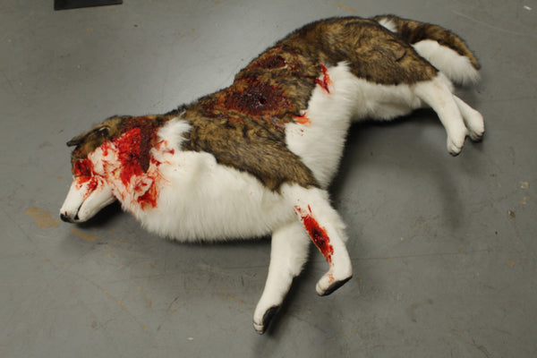 Wounded Brown Husky