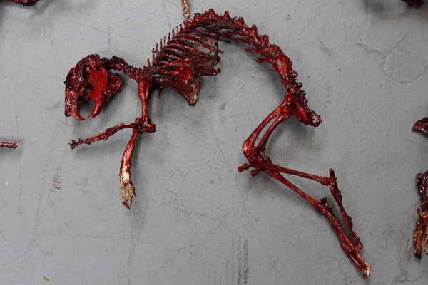 Meaty Rabbit Skeleton
