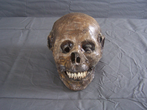 Mummified Harvey Head